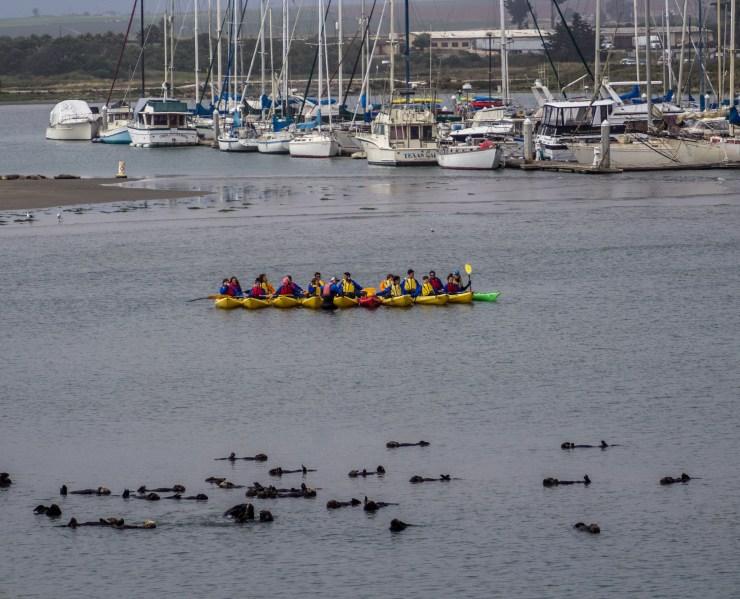 sea otter-IMG_4983