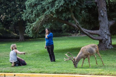 Lithia Park in Ashland, OR. An overly friendly deer, perhaps addled by lithia mineral water. Dawn Page / CoastsideSlackers