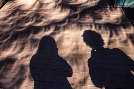 Weird shadows of Douglas fir boughs and photographers during the solar eclipse. Dawn Page / CoastsideSlacking