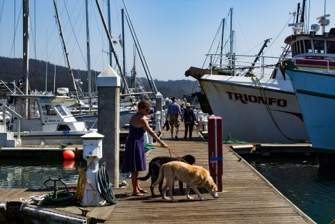 Pillar Point Harbor. Dawn Page / CoastsideSlacking
