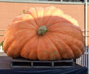 20171015 - pumpkin festival-IMG_5201