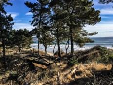 Año Nuevo State Park in Pescadero, California. Dan Page / CoastsideSlacking.