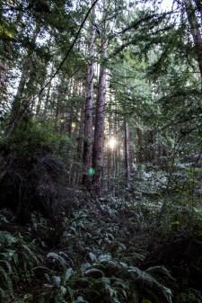 Purisima Creek Redwoods Preserve. Dawn Page / CoastsideSlacking