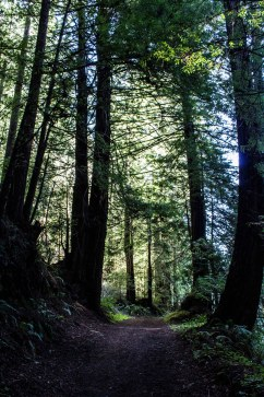 Purisima Creek Redwoods Preserve. Dawn Page / CoastsideSlacking
