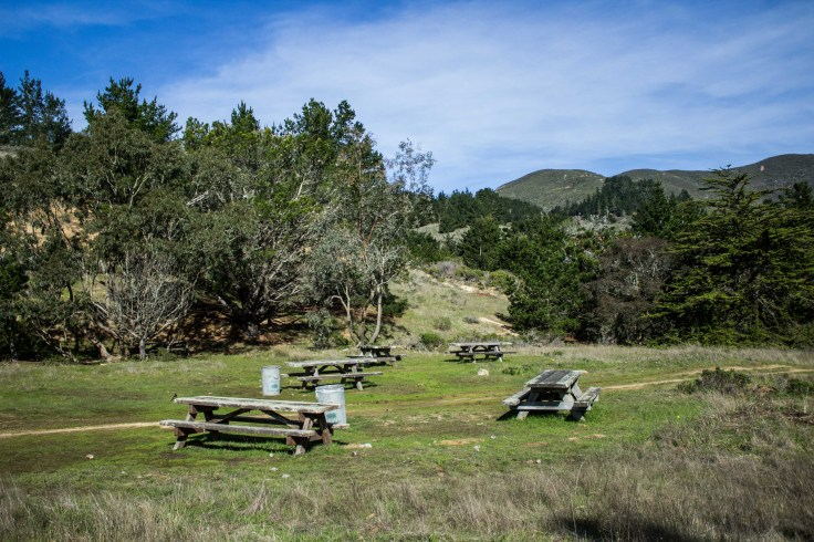 Picnic Area. Montara Mountain. Dawn Page / CoastsideSlacking