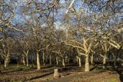 Orchards near bloom along the Blossom Trail near Fresno, CA. Dawn Page / CoastsideSlacking