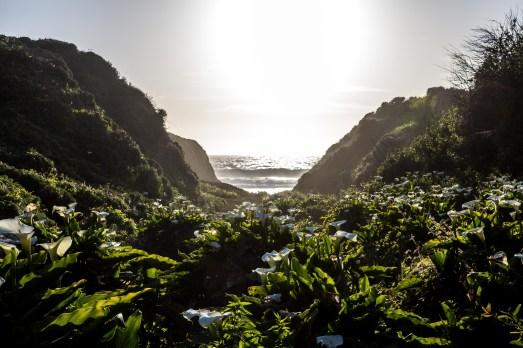 Calla Lily Valley, Big Sur, CA. Dawn Page/CoastsidesSlacking