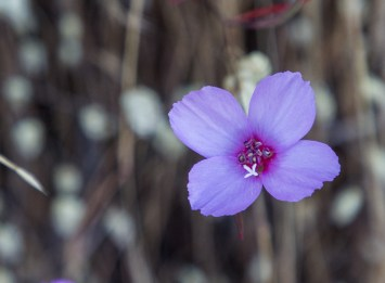 Angel Island State Park. Dawn Page/CoastsideSlacking