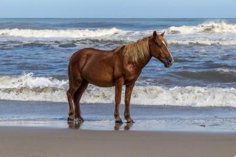 20180926 - wild horses-IMG_1123