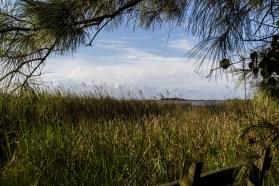 Currituck Banks Maritime Forest. Dawn Page/CoastsideSlacking