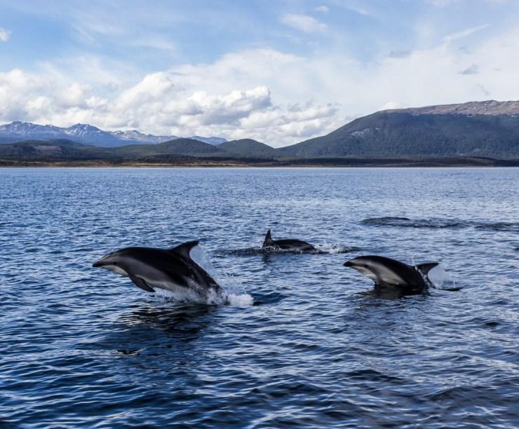 20190302 - Ushuaia Tierra del Fuego-IMG_0492