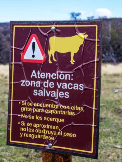 Cow warning. Dawn Page/CoastsideSlacking
