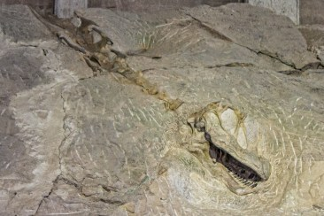 Wall of bones. Dinosaur National Monument. Dawn Page/CoastsideSlacking