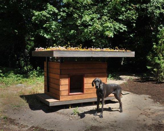 Image Result for Dog Kennel Plans Diy
