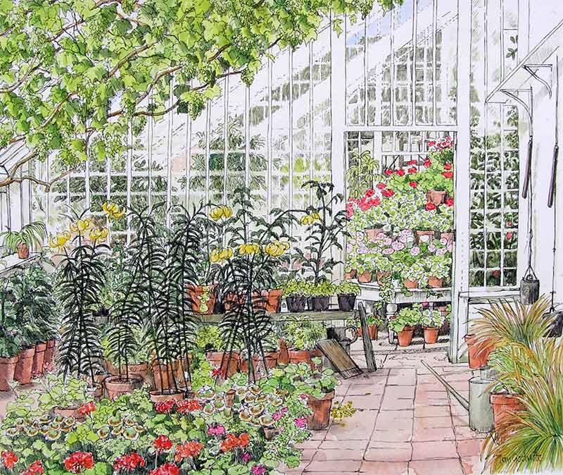 FranGodwood_Turkscap-lilies