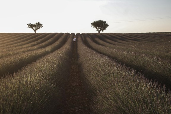 paca_valensole_lavender_fields_sunset_floriane_in_the_field