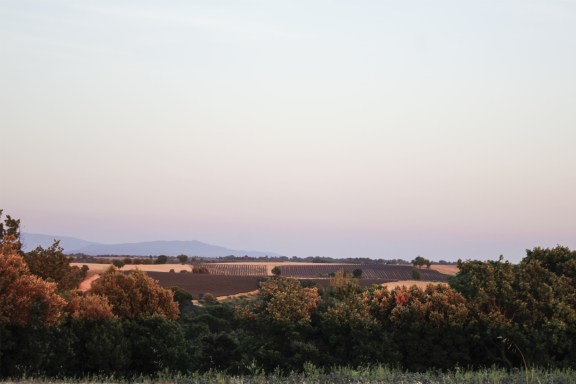 paca_valensole_lavender_fields_sunset_other_side
