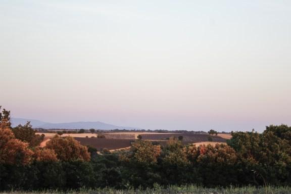 paca_valensole_lavender_fields_sunset_other_side