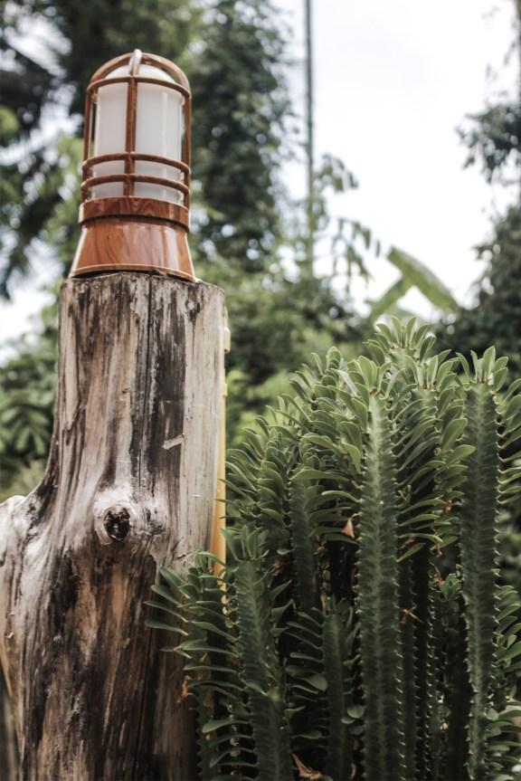 cobalt_state_laos_4000_islands_cactus