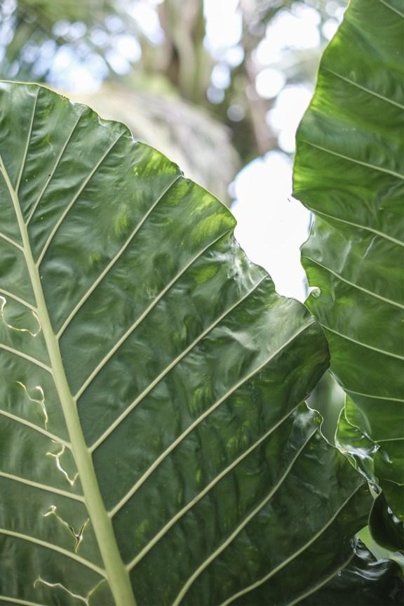 cobalt_state_laos_4000_islands_leaves