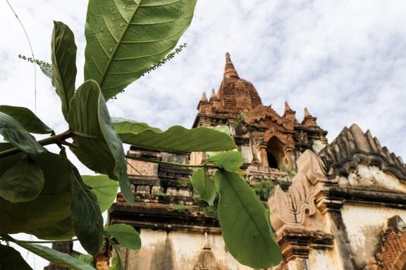 cobalt_state_myanmar_bagan_afternoon_temple_tree