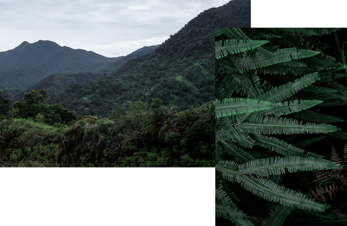 green leaves mountains