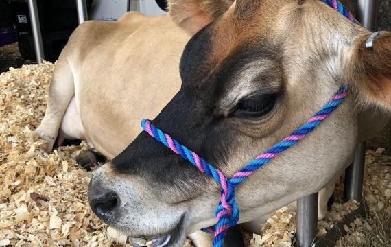 Georgia Mobile Dairy Classroom Visits Cobb County Farm Bureau Farmers Market