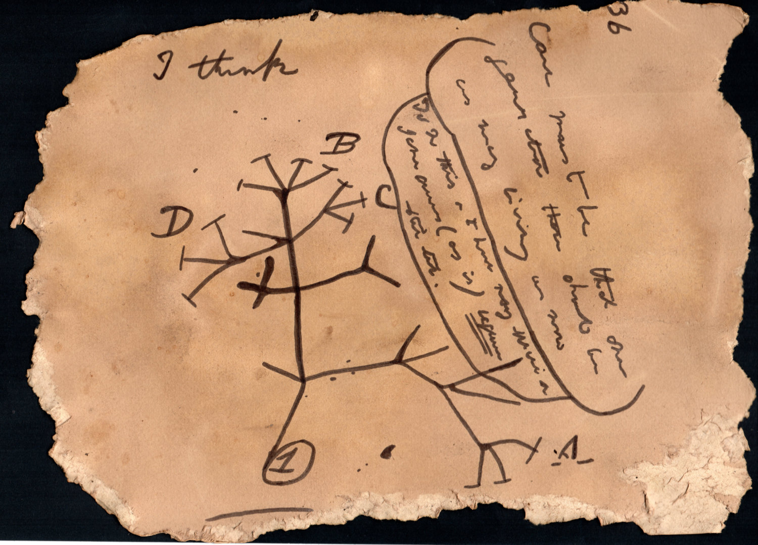 Darwin S Unpublished Tree Of Life Brown Text