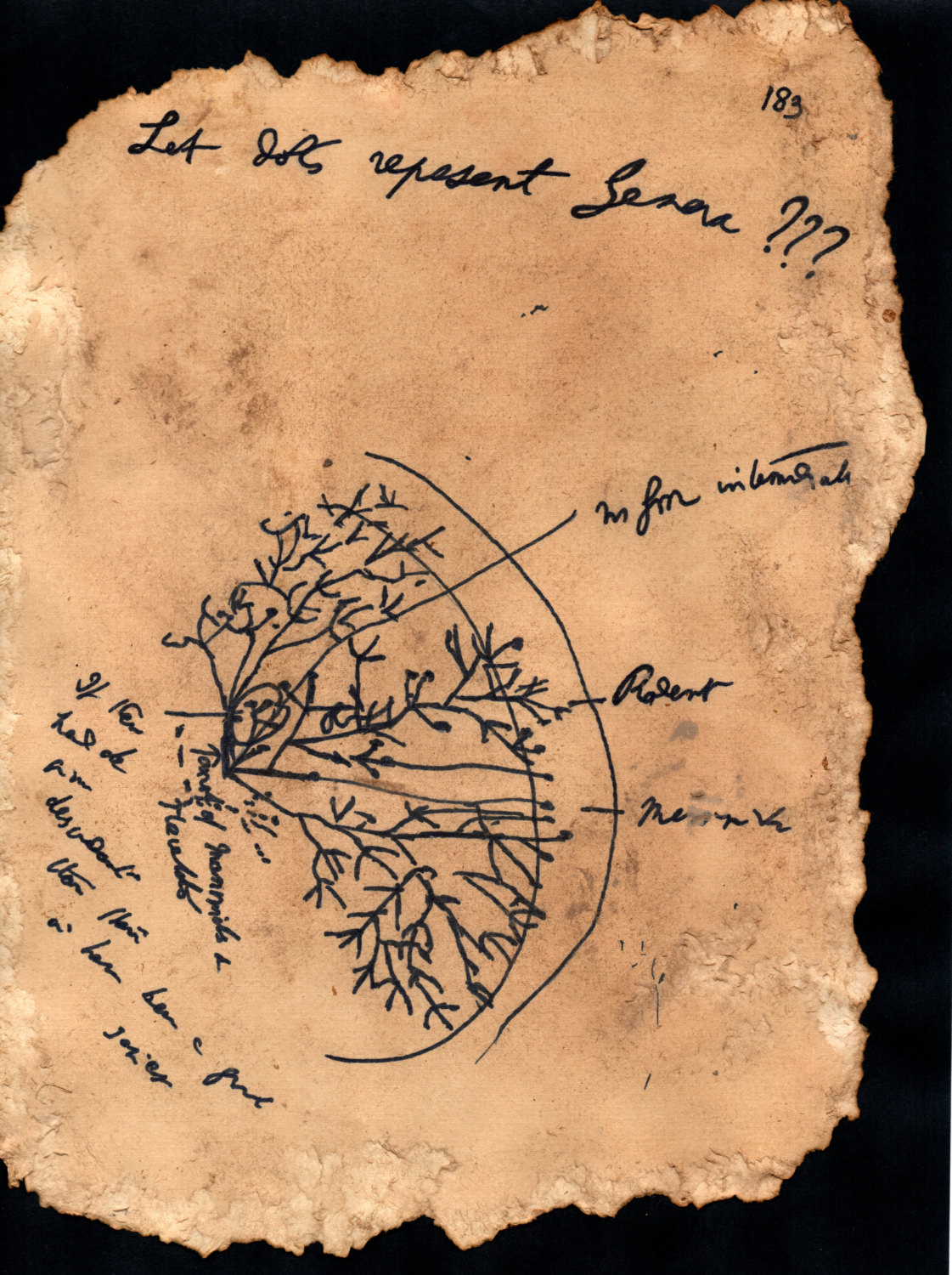 Hand Drawn Darwin S Coral Of Life Sketch Full Page 183