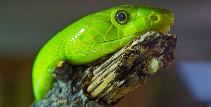 9 breathtaking snake pictures � cobrasorg