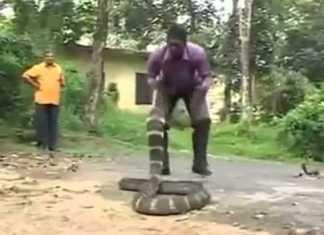 snake catcher