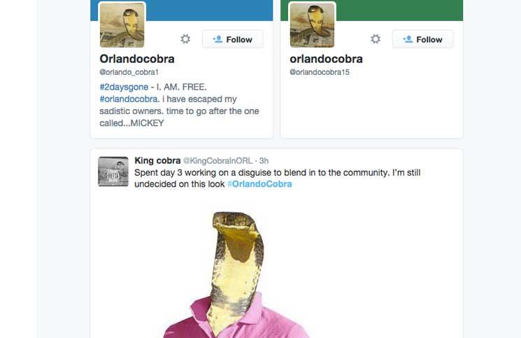 King Cobra Snake goes Social, becomes Viral – Cobras.org