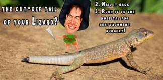 lizard facts