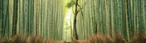 Yoi‐Shigoto, CSR in Japan, Yingyan Wang, Keio University, Keio Business School, Council on Business & Society, intercultural management, diversity, employee wellbeing in Japan