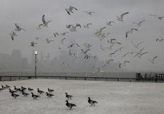 9. 'Nemo' azota la costa Este de EEUU (Reuters)