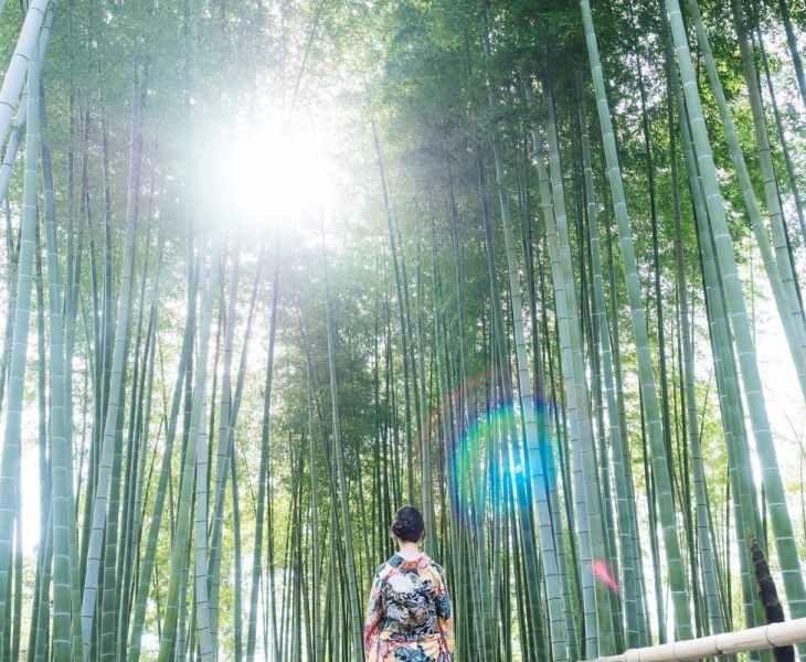 woman wears kimono walks between bamboo trees