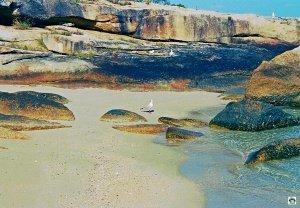 Lizard Island spiaggia