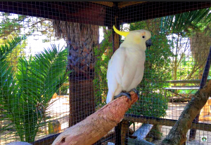 pappagallo Porto Santo