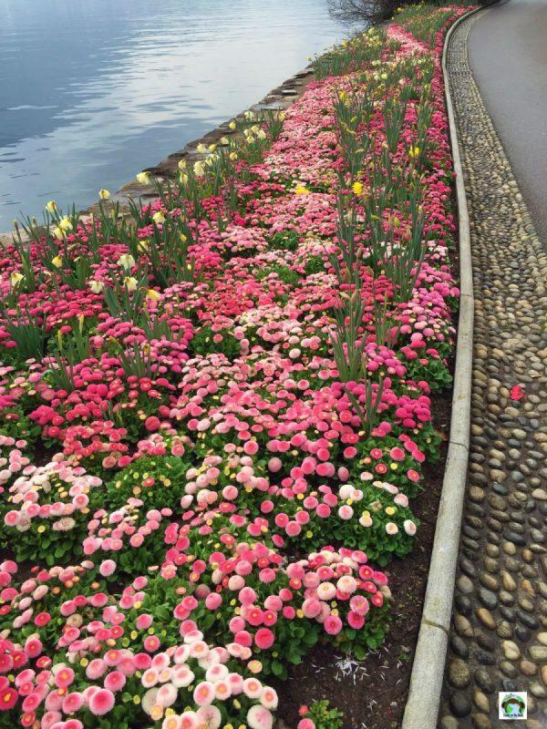 Lugano ed i suoi fiori