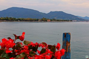 Iseo fiori - Cocco on the road
