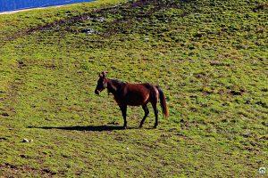 Cavallo sul Pian del Cansiglio - Cocco on the road