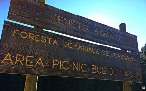 La foresta del Cansiglio - Cocco on the road