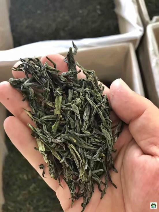 erbe di tè