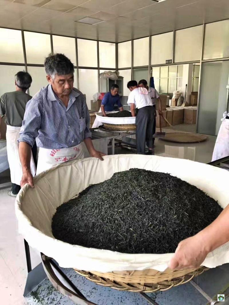operai asiatici che lavorano il tè