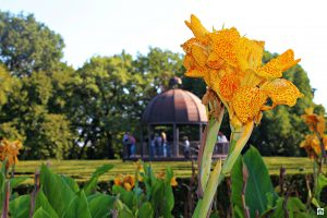Parco Giardino Sigurtà fiori piante