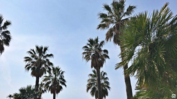 palme a Varazze