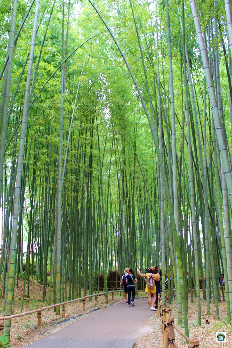 Foresta di Bamboo Kyoto cosa vedere