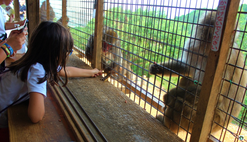 Monkey park Arashiyama Kyoto