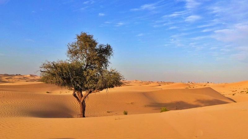 Deserto Abu Dhabi