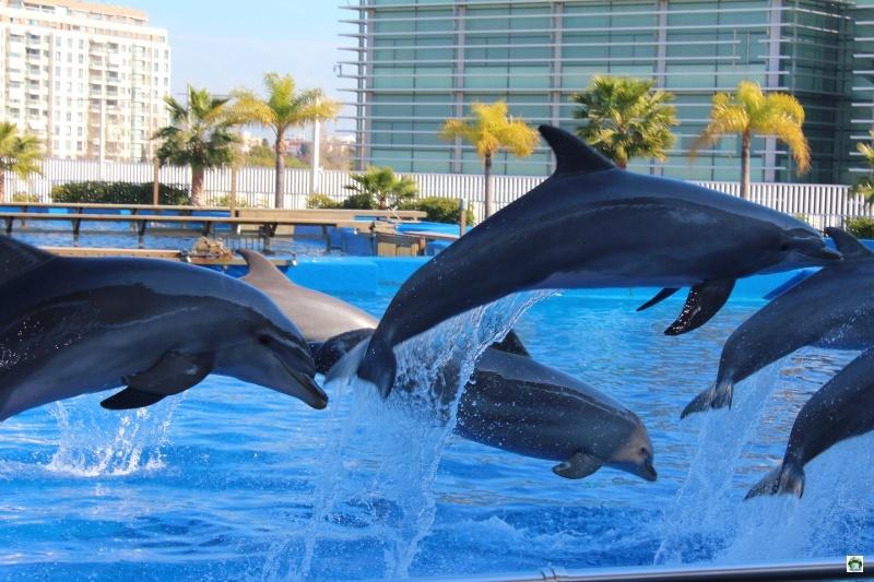 Spettacolo dei delfini a Oceanografic Valencia